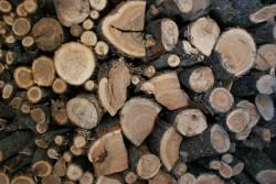 Незаконно добита дървесина е иззета при полицейска операция