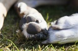 Прокуратурата разследва убийство на бездомни кучета в Трудовец
