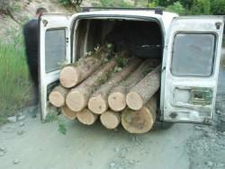 Криминално проявен и осъждан мъж е задържан при акция срещу незаконния дърводобив