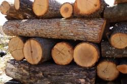 Заловиха 7 кубика немаркирани дърва за огрев без документи в Осиковица
