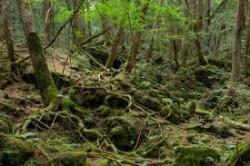 62-годишен мъж бе открит обесен в гората край Врачеш