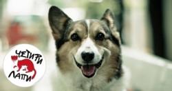 Започва трета кампания за овладяване популацията на бездомните кучета