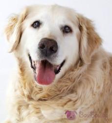 Общината започва проверки за регистрация на домашните кучета