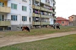 """Премахват незаконните животински ферми в квартал """"Саранск"""""""