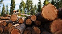 Мъж от Врачеш, превозвал незаконно добита дървесина, е привлечен като обвиняем