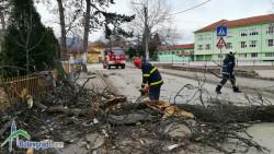 """Заради паднало дърво затвориха временно ул. """"Христо Ботев"""""""