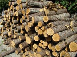 Мъж от Трудовец е заловен с незаконно добита дървесина