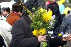 МОСВ: По пролетните празници избягвайте покупка на цветя и клонки от нерегламентирани търговци