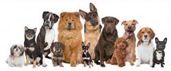 """Организират образователен семинар """"Кинология и поведение на кучето"""""""