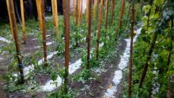 Градушка се изсипа днес в Лопян
