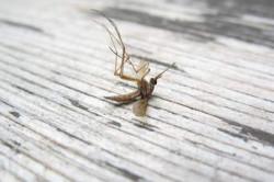 Започва обработка срещу комари чрез опушване