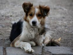 70 новорегистрирани кучета в общината