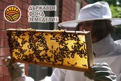 Пчеларите кандидатстват от 7 януари по мерките на НПП