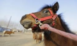Жител на Литаково е задържан във връзка с кражба на коне