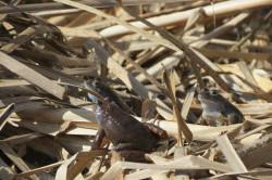 Община Ботевград и Националният природонаучен музей отбелязват Деня на Жабешкото блато