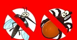 Тревните площи в Етрополе ще бъдат обработени срещу бълхи, кърлежи и комари