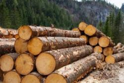 18-годишен жител на Скравена е загинал при дърводобив