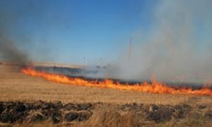 РСПБЗН - Правец: Опасност от пожари в житните масиви