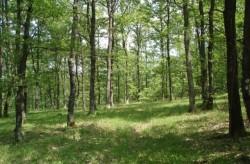 Държавата ще изкупува частни гори