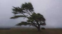 Съвети за безопасност при силни ветрове