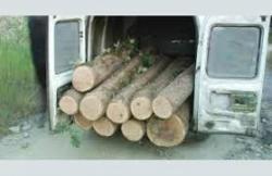 Петима, превозвали незаконно добити дърва, са задържани от етрополските полицаи