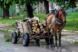 Каруца с незаконно добита дървесина е установена при полицейска проверка