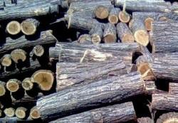 Откриха дървен материал без документи в къща във Врачеш