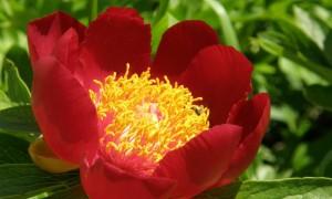 На 24 юни отбелязваме деня на лечебните растения
