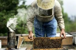 1 658 заявления за плащане за 6 млн. лв. са подадени по пчеларската програма за 2020 година
