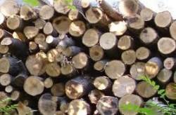 Незаконно добита дървесина е иззета от частен имот в Литаково