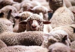 Нова наредба ще урежда  и определя обема на животновъдната дейност и местата за отглеждане на селскостопански животни
