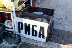 Между 6 и 7 лева струва никулденският шаран в Ботевград