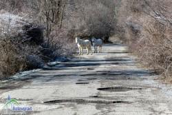 Общината е получила отказ от държавата за пътя през Ботевградския проход  /Арабаконак/