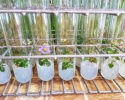 Цвете в епруветка – алтернатива на букетите