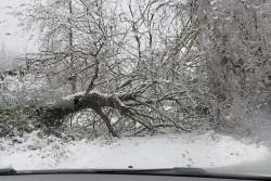 Снеговалежът остави без ток села в община Ботевград. Постъпили са и сигнали за паднали дървета и клони