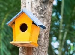 Инициативата за оцветяване на къщички за птици продължава