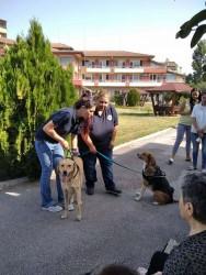 """Домът за възрастни хора в Ботевград и """"Четири лапи"""" си партнират по проект """"Животни помагат на хора"""""""