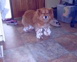 Куче, газило в снега!